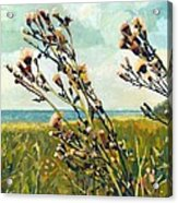 Thistles On The Beach - Oil Acrylic Print by Michelle Calkins