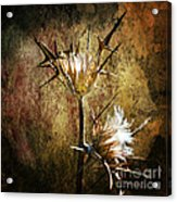 Thorns Acrylic Print by Stelios Kleanthous