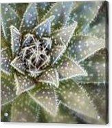 Thorny Succulent Acrylic Print