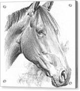 Thoroughbred Pencil Portrait Acrylic Print