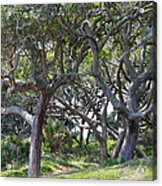 Jekyll Island Beach Path Acrylic Print by Ella Char