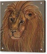 Thoughtful Lion 2 Acrylic Print