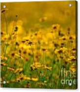 Thoughts Of Spring Acrylic Print