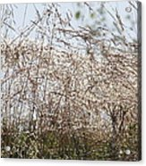 Thousands Of Shimmering Raindrops Acrylic Print