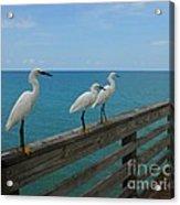 Three Amigos Acrylic Print by Mel Steinhauer