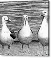Three Amigos Acrylic Print