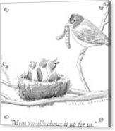 Three Baby Birds In A Nest Talk To A Grown Bird Acrylic Print