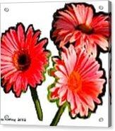 Three Bright Red Flowers Acrylic Print
