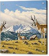 Three Bucks On The Ridge Acrylic Print