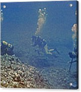 Three Divers In Hawaii Acrylic Print