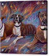If Dogs Go To Heaven Acrylic Print