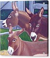 Three Donkeys Acrylic Print