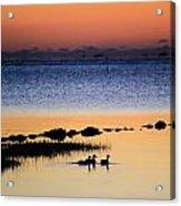 Three Ducks At Dawn Acrylic Print
