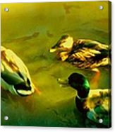 Three Ducks On Golden Pond Acrylic Print