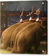 Three Elephants At The Circus Acrylic Print