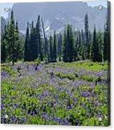 105417-three Fingered Jack And Wildflowers Acrylic Print