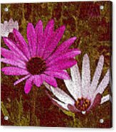 Three Flowers On Maroon Acrylic Print