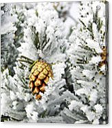 Three Frosty Cones Acrylic Print