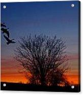Three Geese At Sunset Acrylic Print