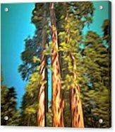 Three Giant Sequoias Digital Acrylic Print