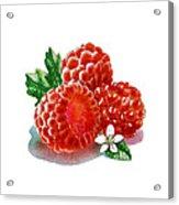 Three Happy Raspberries Acrylic Print