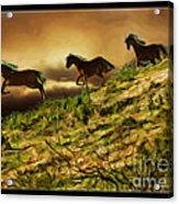 Three Horse's On The Run Acrylic Print