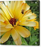 Three Insects And A Flower Acrylic Print