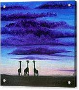 Three Jiraffes Acrylic Print by Pilar  Martinez-Byrne