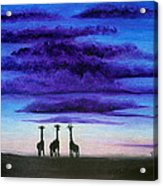 Three Jiraffes Acrylic Print