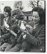 Three Little Bears Called Cilla, George And Ringo Acrylic Print