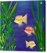 Three Little Fish Acrylic Print