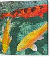 Three Mixed Koi Acrylic Print