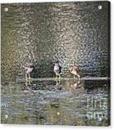 Three Of Us Acrylic Print