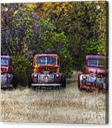 Three Old Friends Acrylic Print by Kandy Hurley