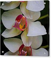 Three Orchids Acrylic Print