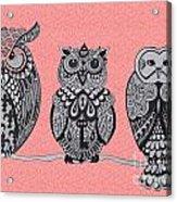 Three Owls On A Branch Pink Acrylic Print