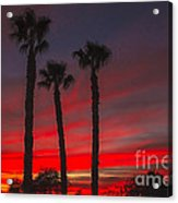 Three Palm Sunset Acrylic Print