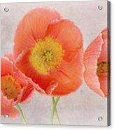 Three Peach Poppies Acrylic Print