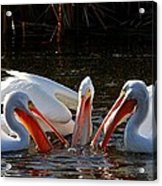 Three Pelicans And A Fish Acrylic Print