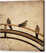 Three Pigeons Perched On A Metallic Arch. Acrylic Print