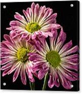 Three Pink Flowers Acrylic Print