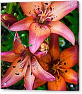 Three Pink Lilies Acrylic Print