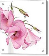 Three Pink Lisianthus Flowers Acrylic Print