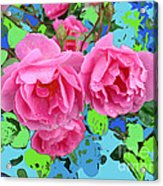 Three Pink Roses By M.l.d.moerings 2010 Acrylic Print