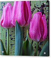 Three Pink Tulips Acrylic Print