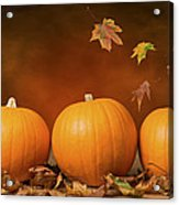 Three Pumpkins Acrylic Print by Amanda Elwell