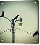 Three Raven Hoedown Acrylic Print