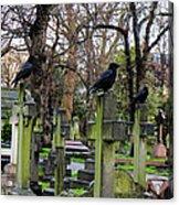 Three Ravens Acrylic Print