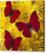 Three Red Butterflys Acrylic Print by Garry Gay