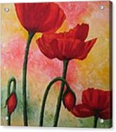 Three Red Poppies Acrylic Print